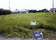 草刈作業1